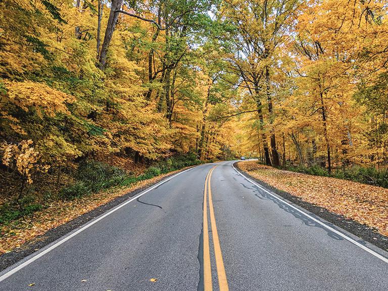 Road Apple Roubaix